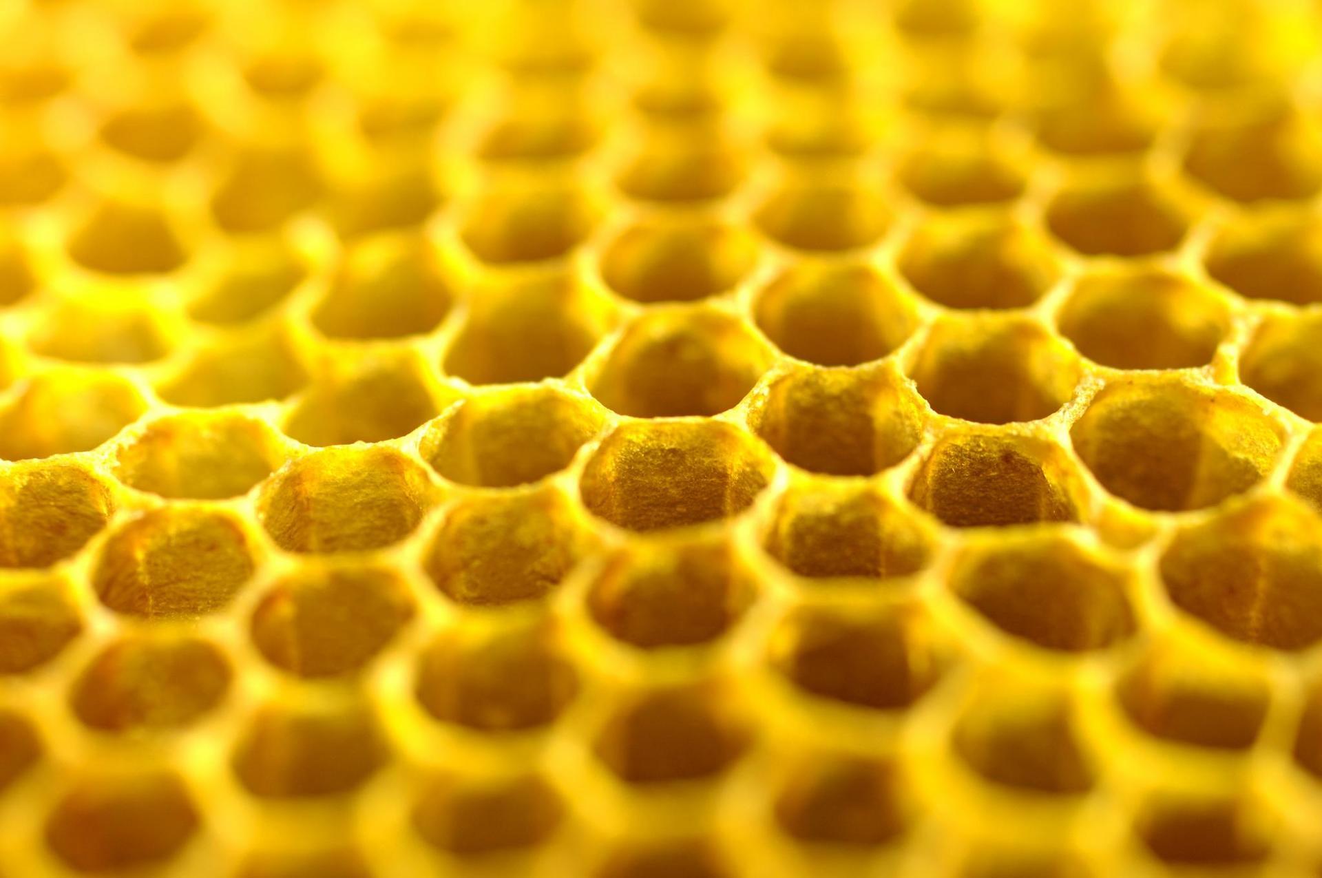 GENUSS REGION ÖSTERREICH  KÄRNTEN - Rosentaler Carnica Honig -  Detailansicht Bienenwaben